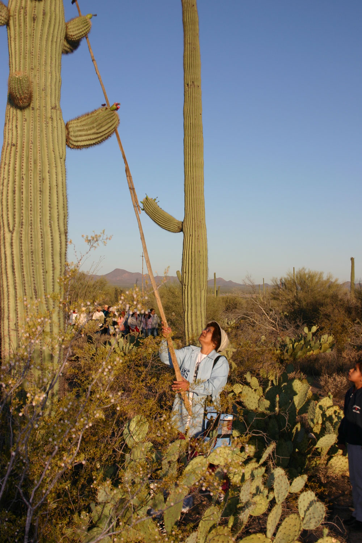 cactus-lady-stick